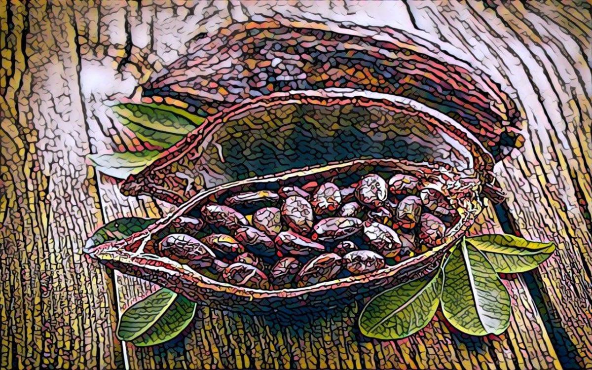 Торговля какао. Как торговать какао и где покупать.