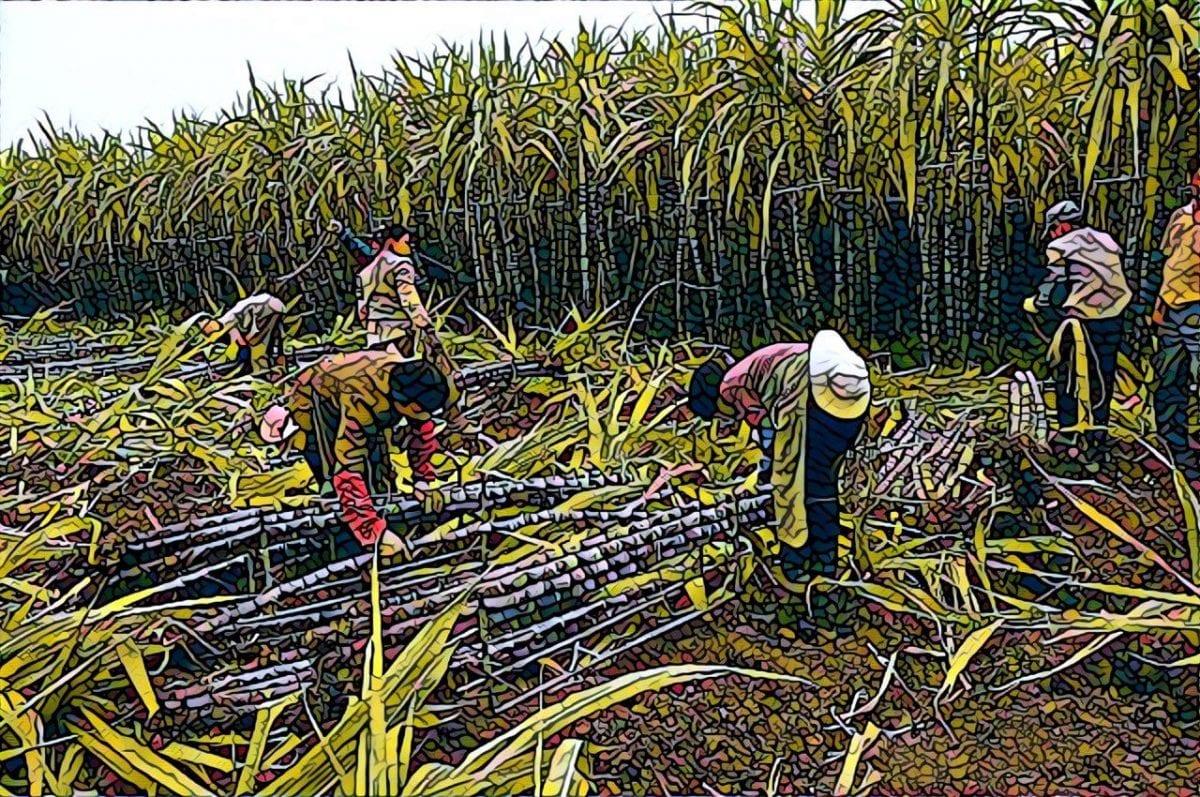 купить тростниковый сахар на бирже